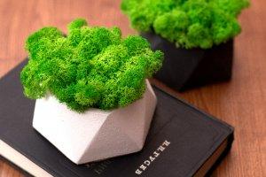 Бетонний кашпо + скандинавський мох