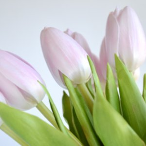 Робота Букет белых тюльпанов (15 шт)