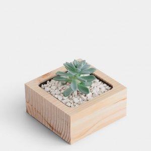 Дерев`яний вазон для кактусів чи сукулентів